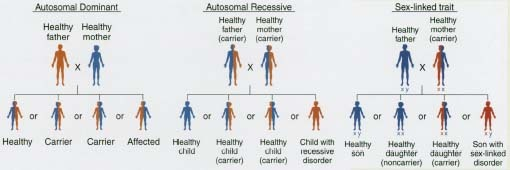 three main systems that are usually affected by cystic fibrosis The male reproductive system is usually also affected how is cystic fibrosis passed on the pattern of inheritance for cystic fibrosis is autosomal recessive a person who inherits one.