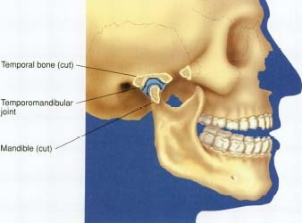 Side view of a temporomandibular joint.