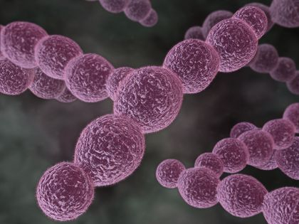 Have researchers found a new treatment for sepsis?